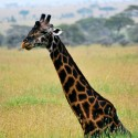 Gentle Living Safaris: Top 15 Tanzania Safari Photos
