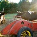 Woodstock Farm Animal Sanctuary: Sample Itinerary
