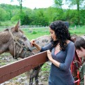Catskill Animal Sanctuary: Sample Itineraries